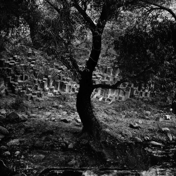 Tree of Garni, Black Garden Series, Split Toned Gelatin Silver Print, 28 x 28 inches, 2011, Edition of 5, $2600.